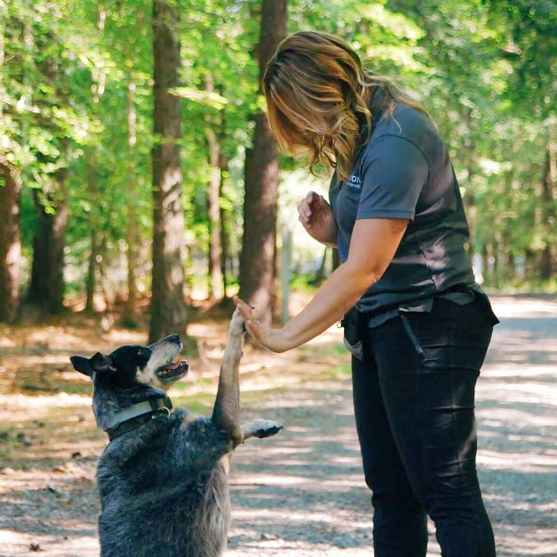 Maintaining a healthy routine for your dog | training