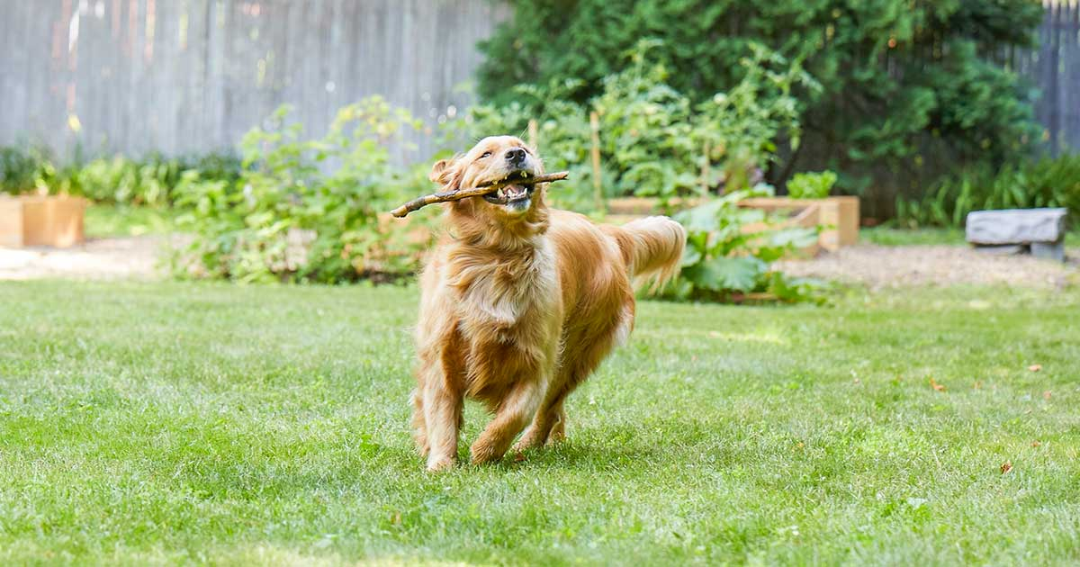Maintaining a healthy routine for your dog | SpotOn