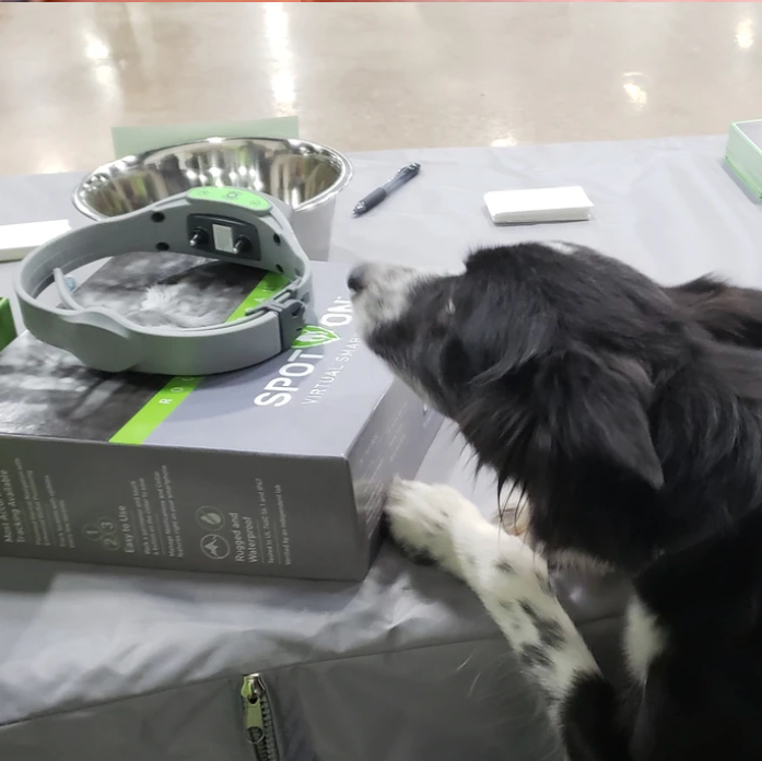 tech products for dogs