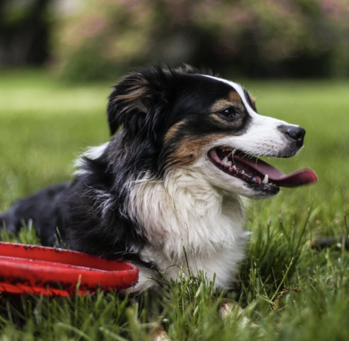 Backyard games for dogs