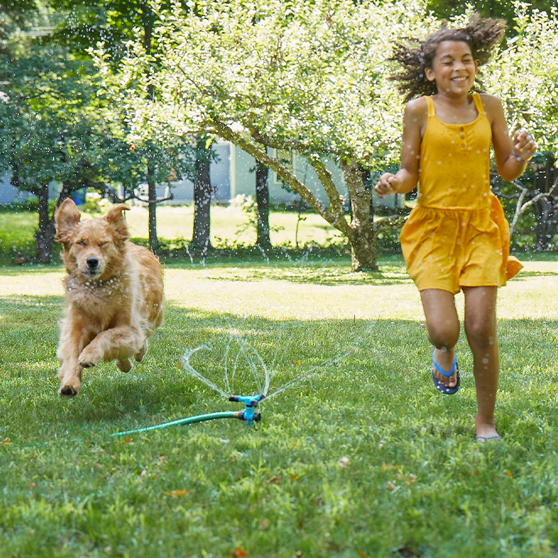 Maintaining a healthy routine for your dog | Play time