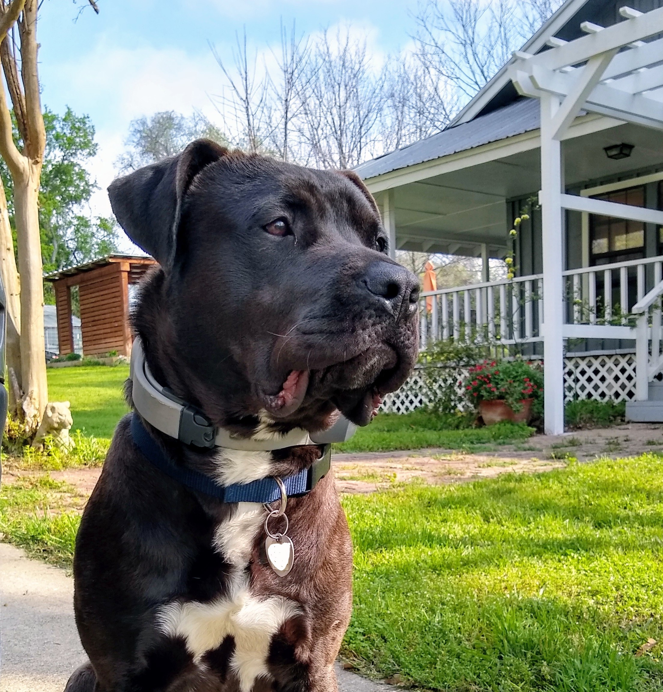 SpotOn Virtual Dog Fence Review