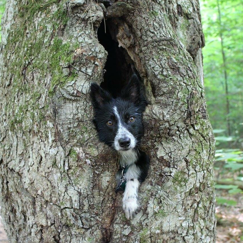 Maintaining a healthy routine for your dog | Hike
