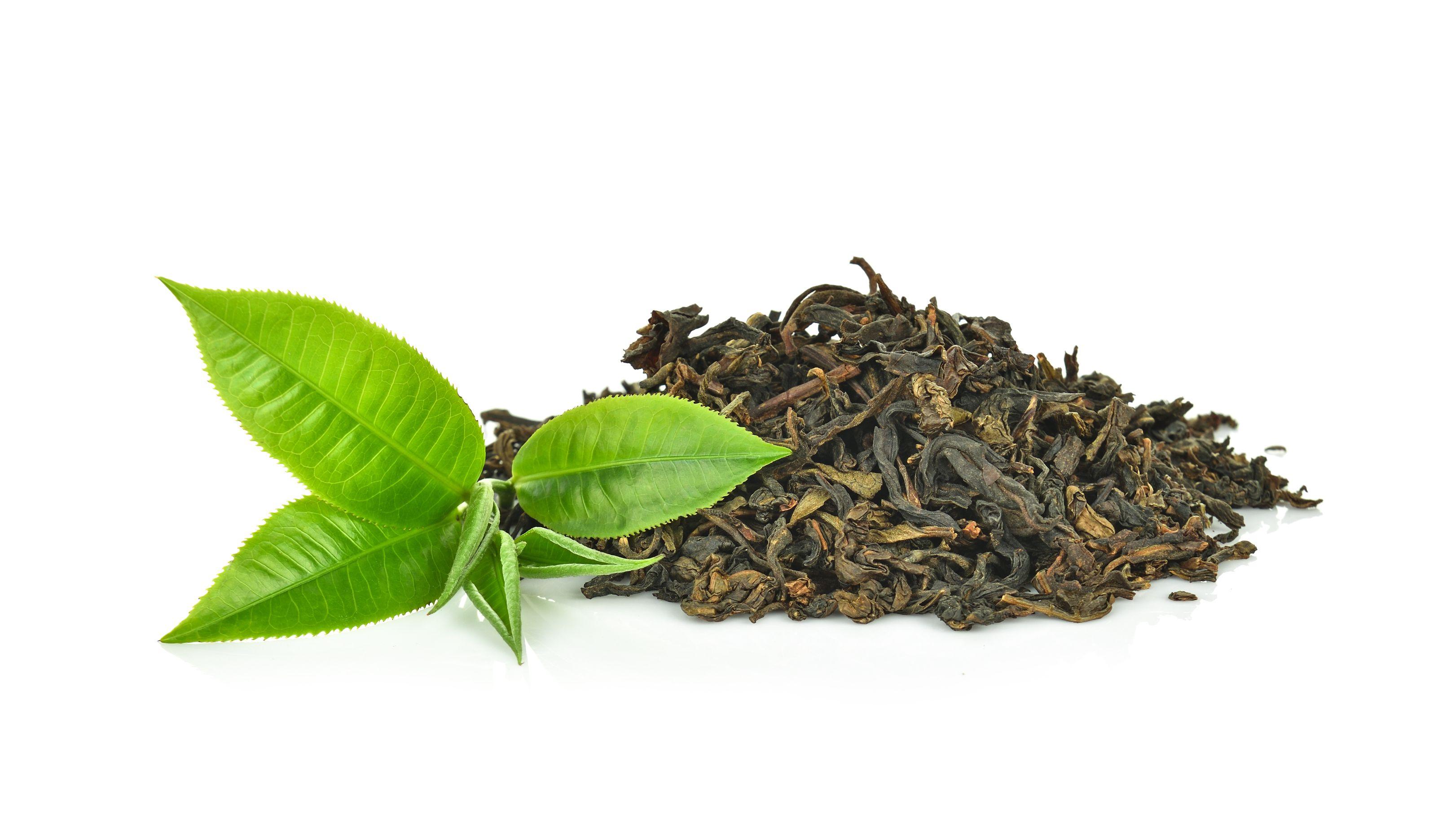 Tea and Tea Varieties