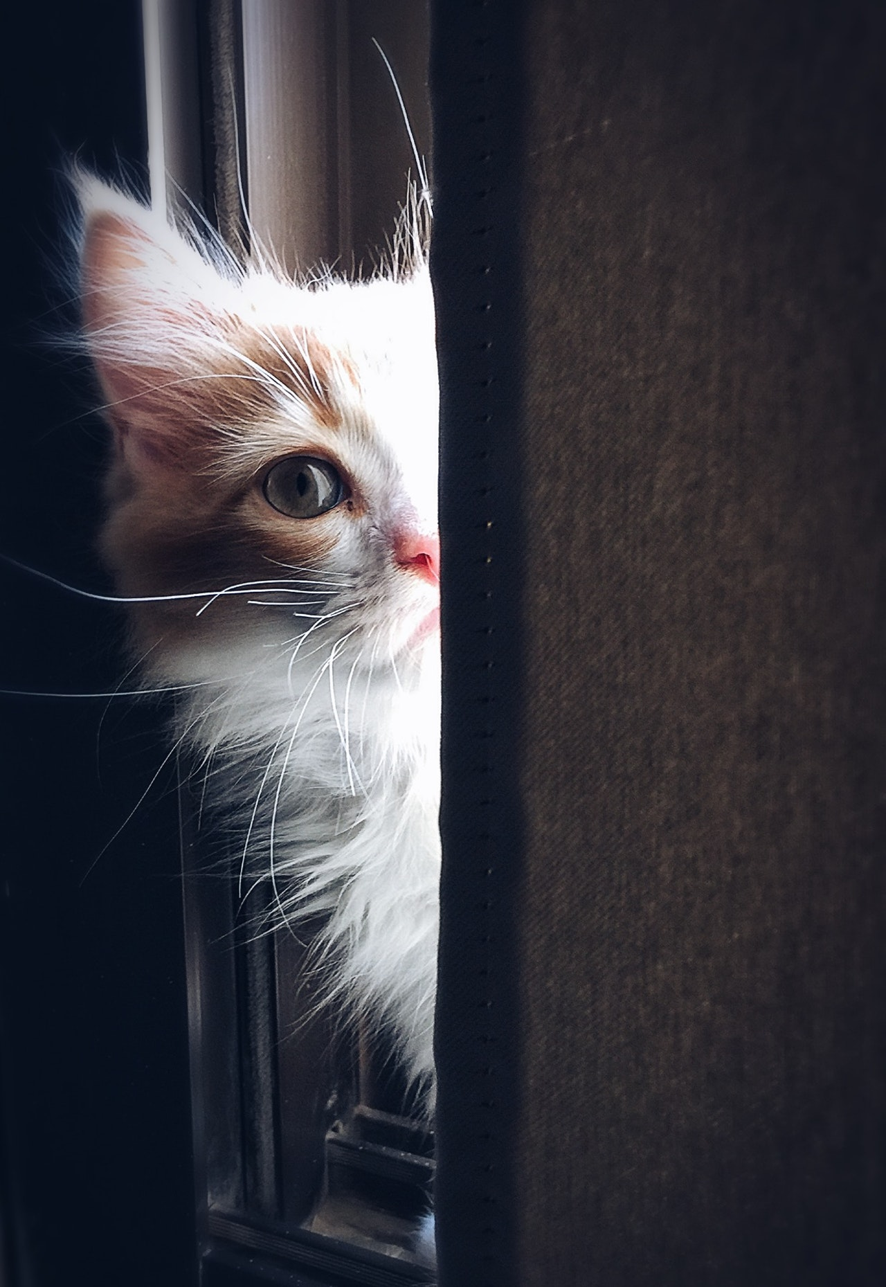 Where can I buy pet food?