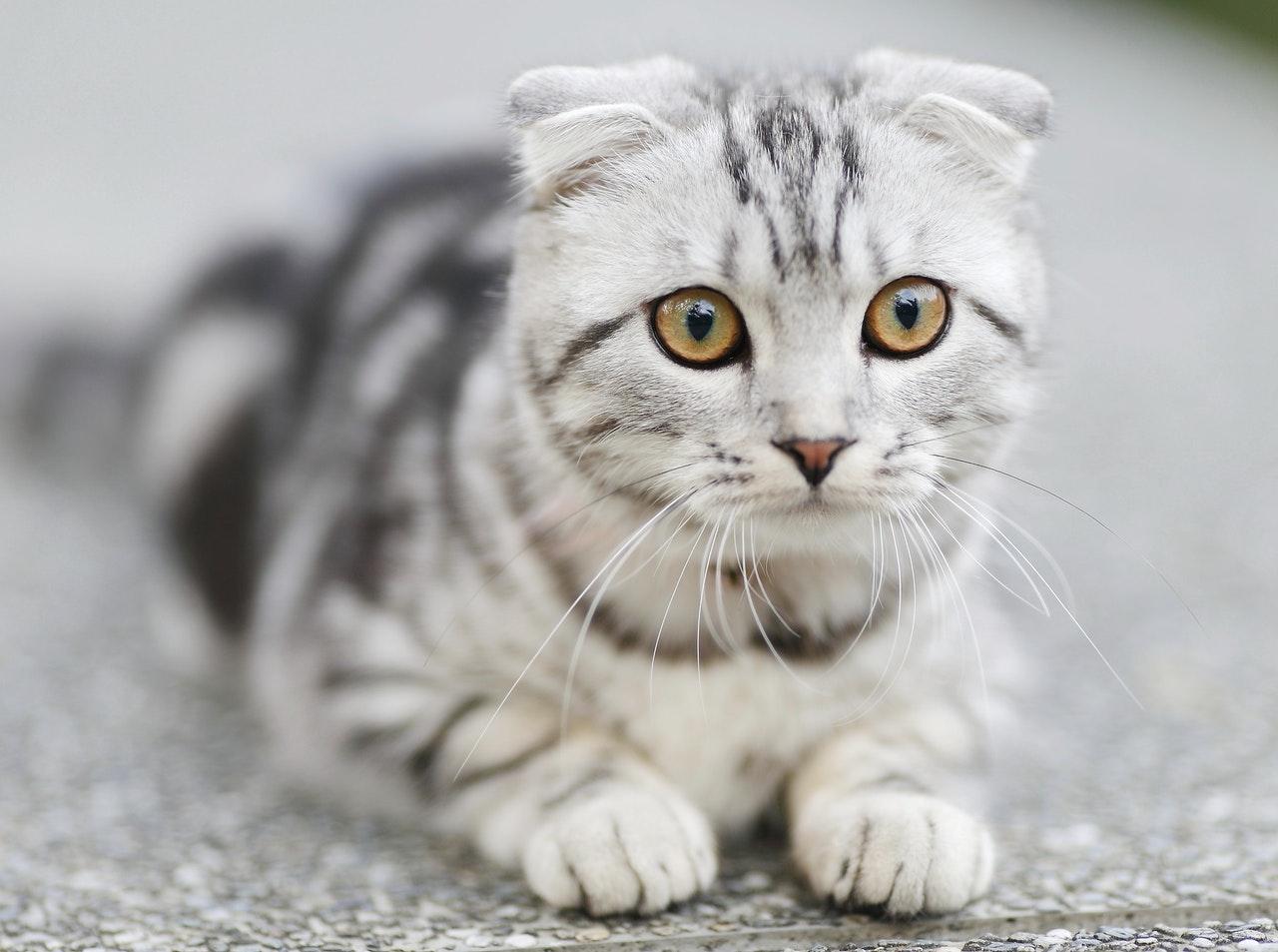 Cat Care 1