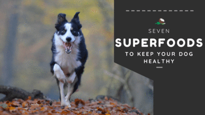 7 SUPERFOODS FOR DOGS TO LIVE BOTH HAPPY AND HEALTHY