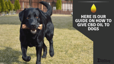 HERE IS OUR GUIDE ON HOW TO GIVE CBD OIL TO DOGS