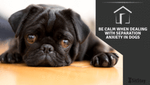 Be calm when dealing with Separation Anxiety in dogs