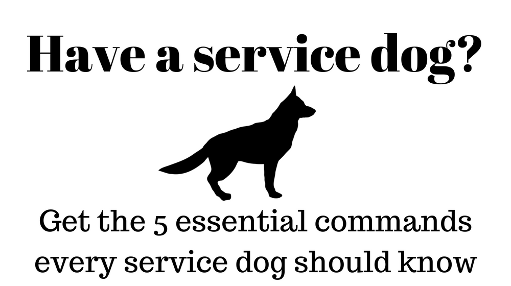 5 essential commands every service dog should know