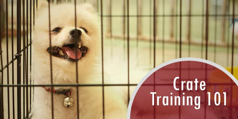 Crate training 101 for dogs