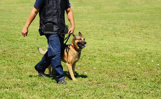 What Happens to Police Dogs When They Retire?