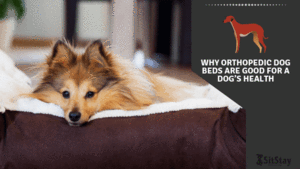 Why orthopedic dog beds are good for a dog's health