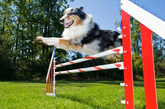DIY Dog agility course