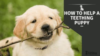 HOW TO HELP A TEETHING PUPPY