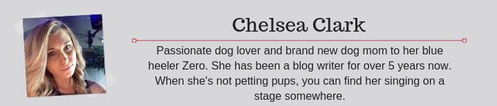 Dog Pregnancy By Chelsea Clark