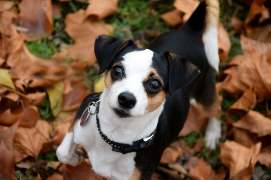 Holiday pet safety: thanksgiving safety tips for pets