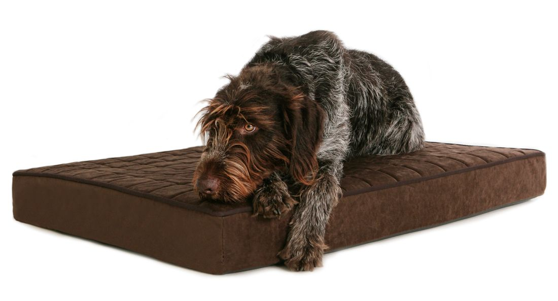 BuddyRest Dog Bed In Use Reducing Dog Pain In An Older Dog