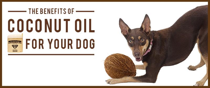 benefits of coconut oil for your dog