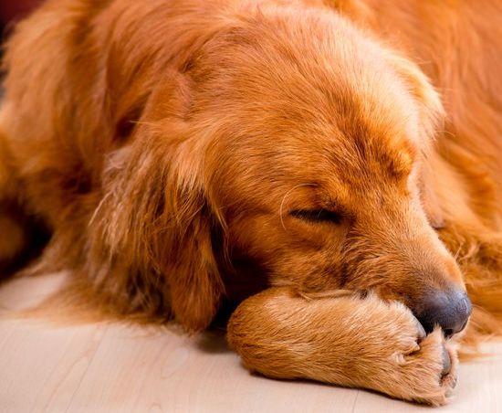 How to treat dog hot spots: moist dermatitis