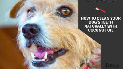 How to clean your dogs teeth naturally with coconut oil