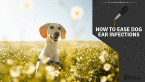 How to Ease Dog Ear Infections