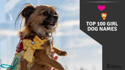 Top 100 girl dog names