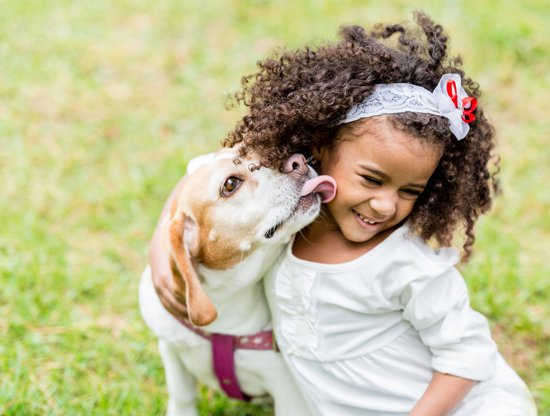 Beagle licking the face of a little girl making it one of the best dog breeds for kids