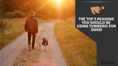 Top 5 Reasons You Should Be Using Turmeric for Dogs