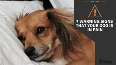 7 WARNING SIGNS THAT YOUR DOG IS IN PAIN