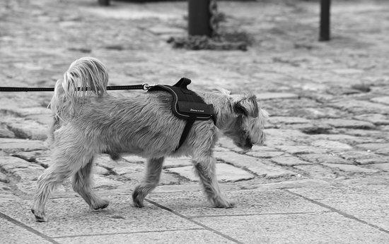 PTSD service dog training