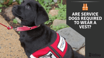 ARE SERVICE DOGS REQUIRED TO WEAR A VEST?