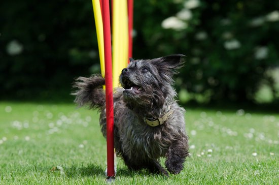 Dog agility course weave poles
