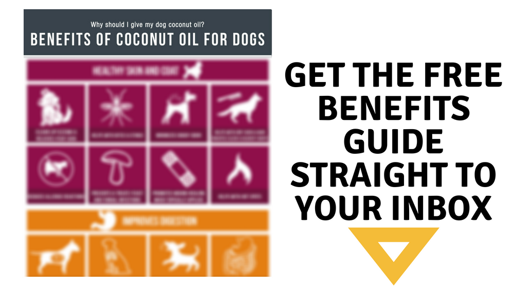 Why should I give my dog coconut oil? Free benefits guide