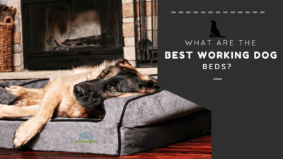What are the best working dog beds