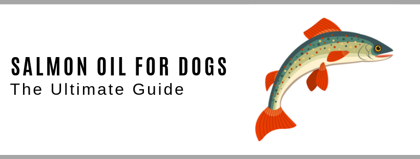 The Ultimate guide To Salmon Oil For Dogs