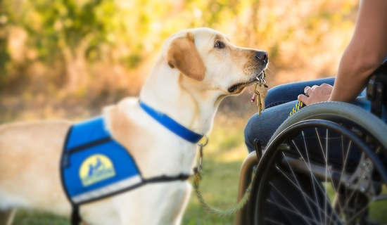 are service dogs required to wear a vest
