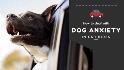 How to Deal with Dog Anxiety in Car Rides