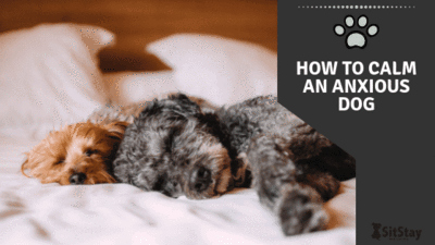 How to Calm an Anxious Dog