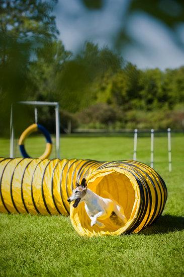 Dog agility course tire jump