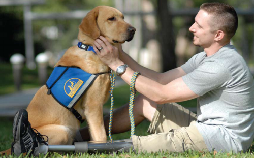 service dogs for anxiety