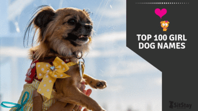 Top 100 Best Girl Dog Names of 2019