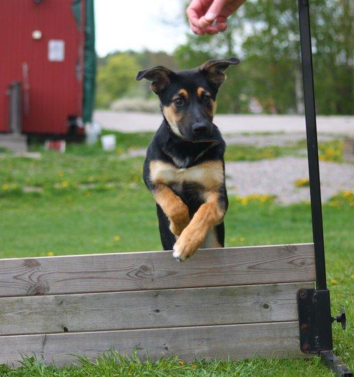 dog agility training for beginners