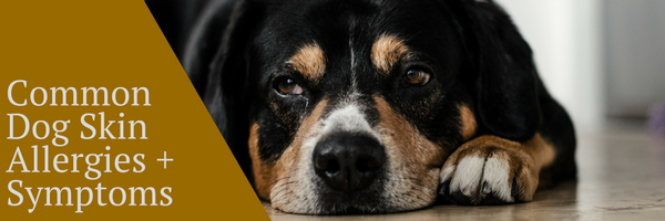 Dog Skin Allergies and Symptoms