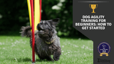 DOG AGILITY TRAINING FOR BEGINNERS: HOW TO GET STARTED