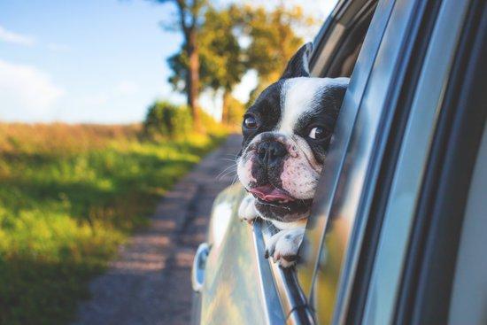 Can You Give a Dog Benadryl?