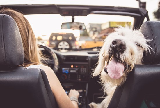 dog anxiety in car rides: how to make your dogs comfortable in a car