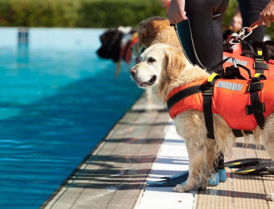 Golden retriever learning to swim with a life jacket on
