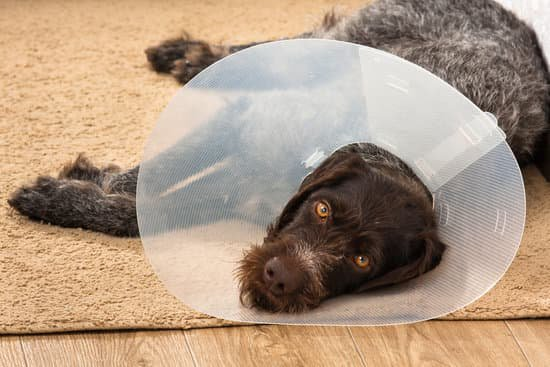 old dog laying down with a cone of shame on