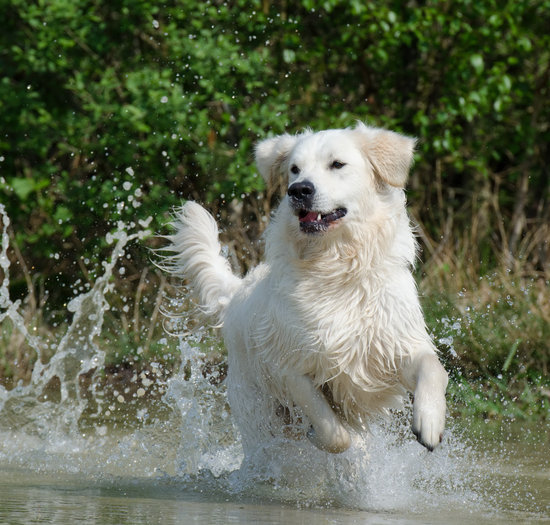 the benefits of salmon oil for dogs